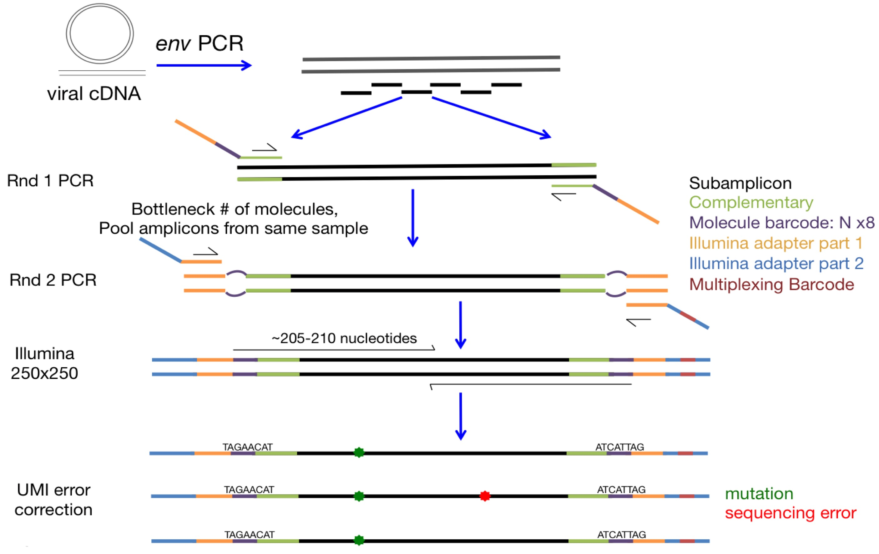 Barcoded-subamplicon sequencing — dms_tools2 2 6 4 documentation